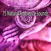 75 Natural Ambience Sounds von Entspannungsmusik