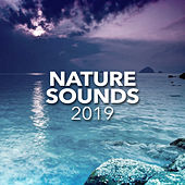 Nature Sounds 2019 - EP by Various Artists