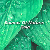 Sounds Of Nature: Rain by Rain Sounds