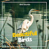 Beautiful Birds by Bird Sounds