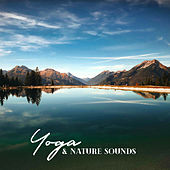 Yoga & Nature Sounds: Meditation Music Zone, Spiritual Awakening, Zen, Deep Harmony von Lullabies for Deep Meditation