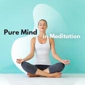Pure Mind in Meditation: Meditation Music Zone, Relaxing Sounds for Relaxing Yoga, Reduce Stress, Zen, Reiki de Meditação e Espiritualidade Musica Academia