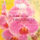 El Show de las Orquídeas de Misi