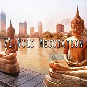71 Wild Meditation by Classical Study Music (1)