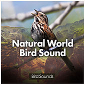 Natural World Bird Sound by Bird Sounds