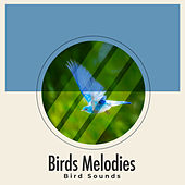 Birds Melodies by Bird Sounds