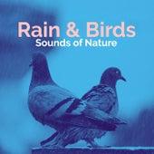 Rain & Birds de Sounds Of Nature