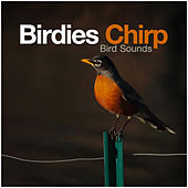 Birdies Chirp by Bird Sounds