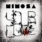Your Love by Mimosa