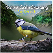 Nature Calls: Sleeping by Bird Sounds