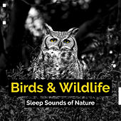 Birds & Wildlife by Various Artists