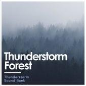 Thunderstorm Forest de Thunderstorm Sound Bank