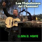 Llora el Monte de Los Majestuosos Del Chamamé