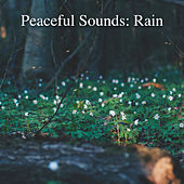Peaceful Sounds: Rain by Rain Sounds