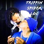 Trippin de Spider Loc
