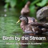 Birds by the Stream de Musica de Relajación Academy