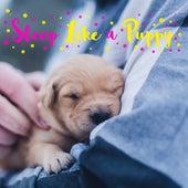 Sleep Like a Puppy by Einstein Baby Lullaby Academy