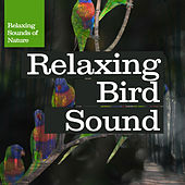 Relaxing Bird Sound by Relaxing Sounds of Nature
