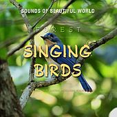 Forest: Singing Birds (Nature Sounds for Relaxation, Meditation, Healing & Sleep) by Sounds of Beautiful World