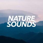 Nature Sounds - EP de Sounds Of Nature