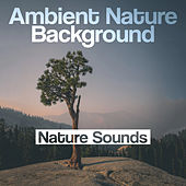 Ambient Nature Background by Nature Sounds (1)