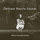 Delicate Nature Sounds de Nature Sounds Artists