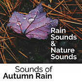 Sounds of Autumn Rain by Rain Sounds