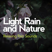Light Rain and Nature by Various Artists