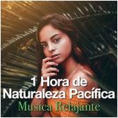 1 Hora de Naturaleza Pacífica de Musica Relajante