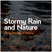 Stormy Rain and Nature by Various Artists