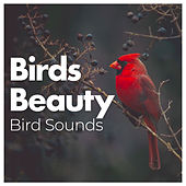 Birds Beauty by Bird Sounds