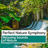 Perfect Nature Symphony by Relaxing Sounds of Nature