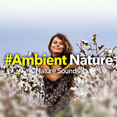 #Ambient Nature by Nature Sounds (1)