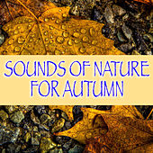 Sounds Of Nature For Autumn by Various Artists
