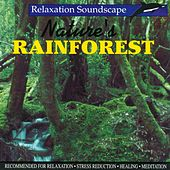 Nature's Rainforest by Anton Hughes
