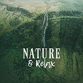 Nature & Relax: Relaxing Vibes to Calm Down, Pure Meditation, Deep Harmony, Zen, Lounge, Ambient Chill by Sleep Sound Library