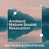 Ambient Nature Sound: Relaxation by Rain Sounds