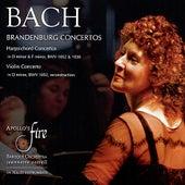 Bach: Brandenburg Concertos, Harpsichord & Violin Concertos von Various Artists