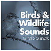Birds & Wildlife Sounds by Bird Sounds
