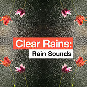Clear Rains by Rain Sounds