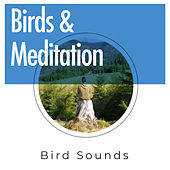 Birds & Meditation by Bird Sounds