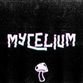 Mycelium de Dio