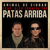 Patas Arriba by Animal de Ciudad