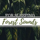 Forest Sounds for Sleeping: Chirping Birds and Natural Wood Recorded Sound Collection by Second Touch