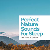 Perfect Nature Sounds for Sleep by Nature Sounds (1)