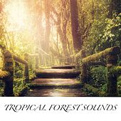 Tropical Forest Sounds by Various Artists