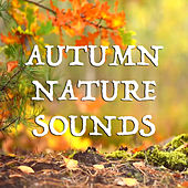 Autumn Nature Sounds by Various Artists
