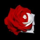 White Roses de Karlman