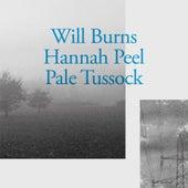 Moth Book von Will Burns