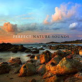 Perfect Nature Sounds: Calming Sounds for Sleep, Relaxation, Deep Rest, Zen, Inner Focus, Calm Down de Nature Sounds Artists